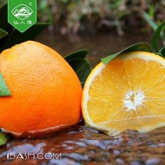 仙人桥 赣南脐橙