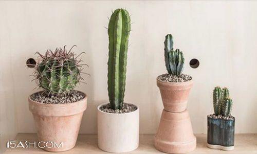 养育一株适合的植物
