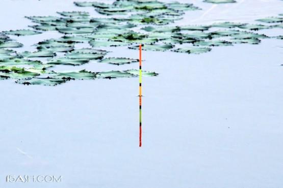 钓鲫的16种漂相,出现了提竿必有鱼